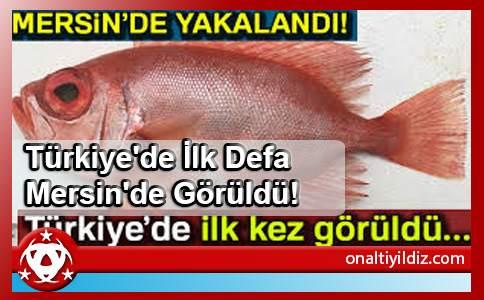 Türkiye'de İlk Defa Mersin'de Görüldü!