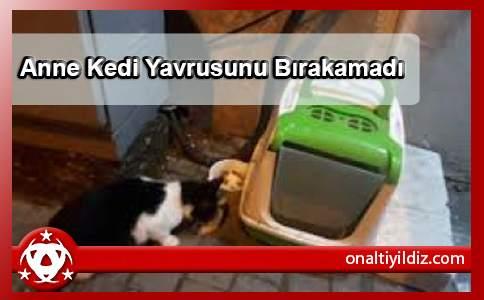 Anne Kedi Yavrusunu Bırakamadı