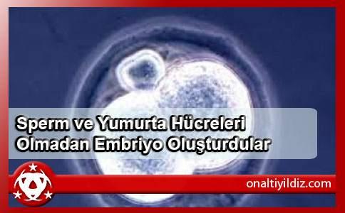 Sperm ve Yumurta Hücreleri Olmadan Embriyo Oluşturdular